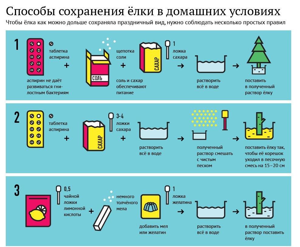 Как выбрать елку на Новый год: инфографика и советы