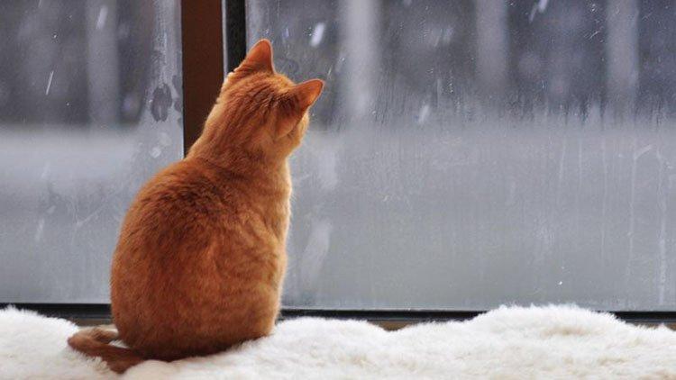 kot sneg